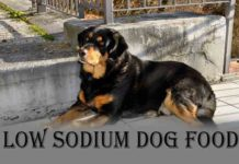 Low Sodium Dog Food