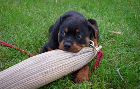 Tips for puppy potty training
